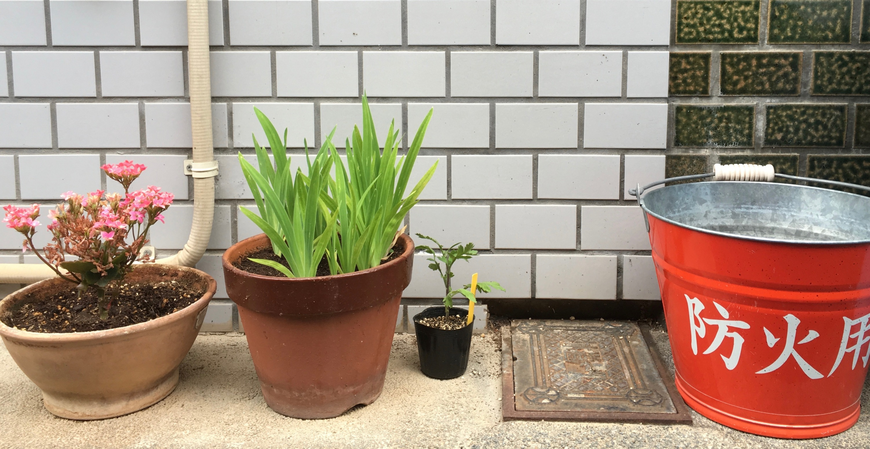 Here is a fire bucket on its own, apart from the pot-plants which I also like to photograph. And the tiles behind them.